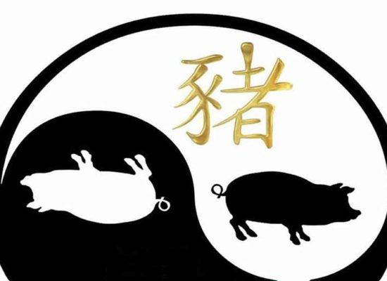 Année du cochon de terre 2019